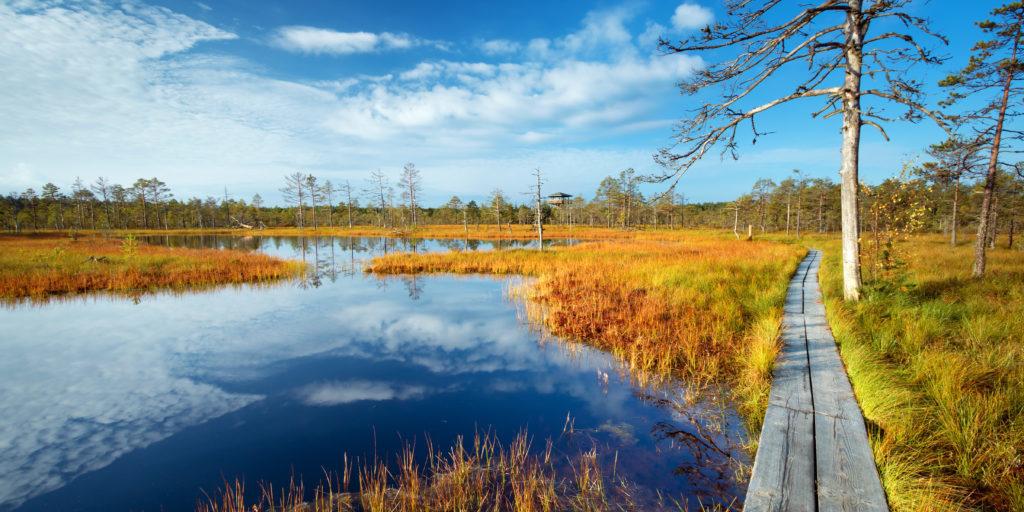 Wandelen in de Baltische Staten